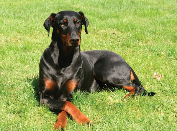 Obligaciones legales perros potencialmente peligrosos